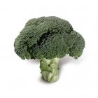 Brócolis Hib. Domador - (HORTICERES)