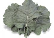 Couve-Folha Manteiga Geórgia - (HORTICERES)