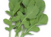 Rúcula Cultivada - (HORTICERES)