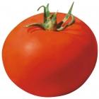 Tomate Fanny - (SEMINIS)