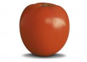 Tomate Santa Clara - (HORTICERES)