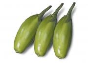 Jiló Comprido Verde Claro - (HORTICERES)