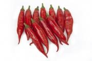Pimenta Cancun (Vermelha) - (HORTICERES)