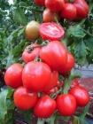 Tomate Cienaga - (SEMINIS)