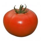 Tomate Compack - (SEMINIS)