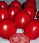 Tomate Kindyo - (SEMINIS)
